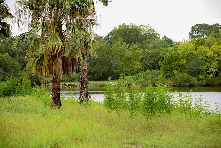 Bayou Bends land
